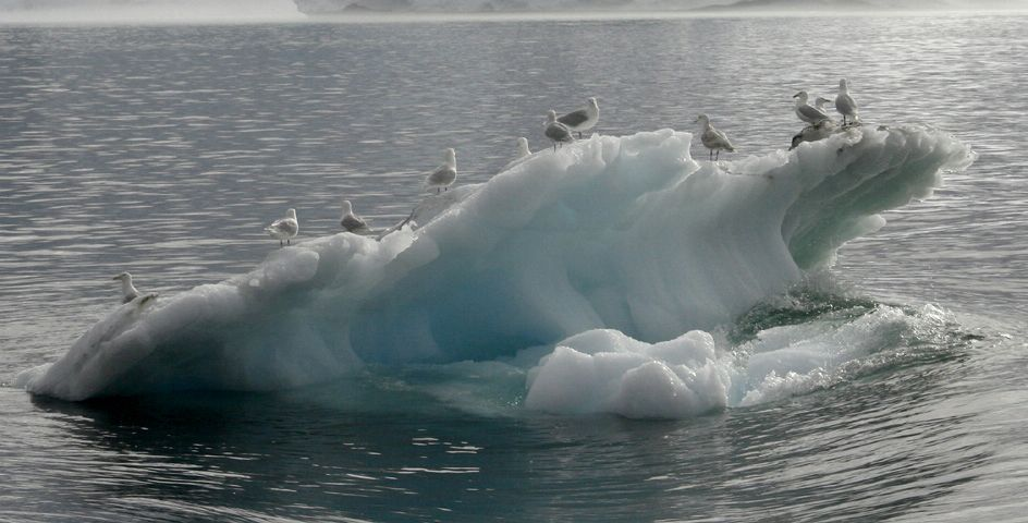 Seabirds perch on floating ice near Greenland's Sermeq Kujalleq glacier.
