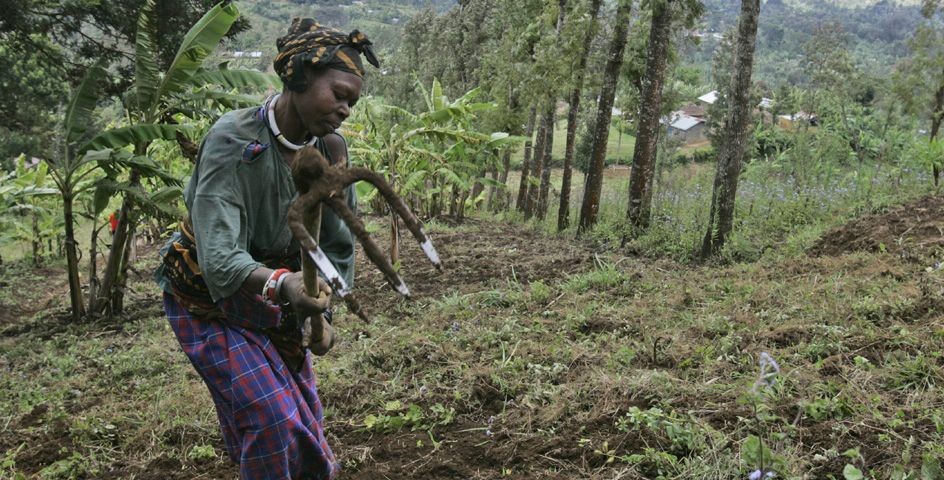 A woman works in the field of Loi Bangoti's farm in the village of Ngiresi, Tanzania.