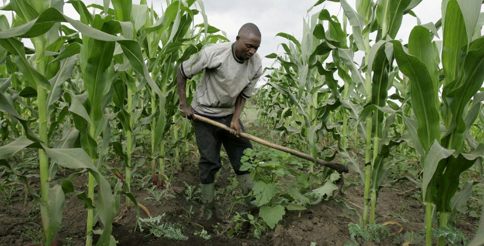 A farmer prepares water channels in his maize field in the village of Ngiresi, Tanzania.