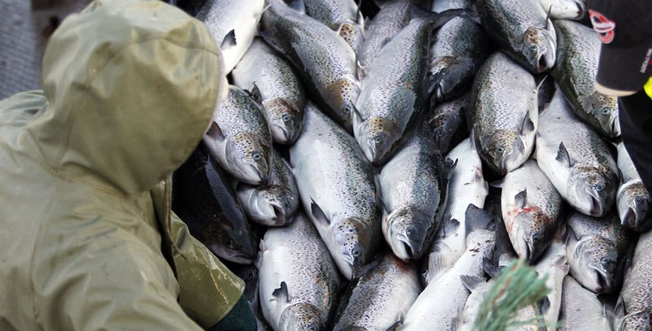 Foreign fishing practices can directly impact U.S. fish supplies.